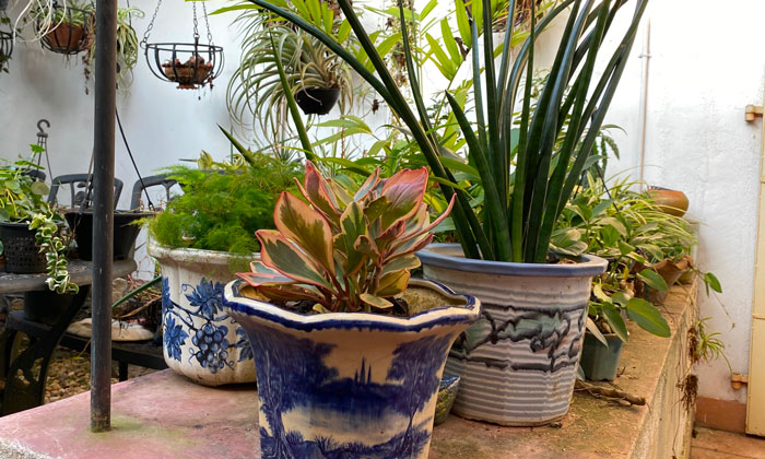 Eric's top 8 tips for healthy potted plants